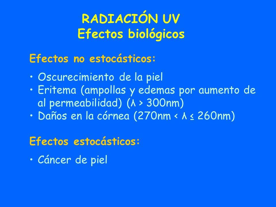 RADIACIÓN UV Efectos biológicos Efectos no estocásticos: Oscurecimiento de la piel Eritema (ampollas y edemas por aumento de al permeabilidad) (λ > 30