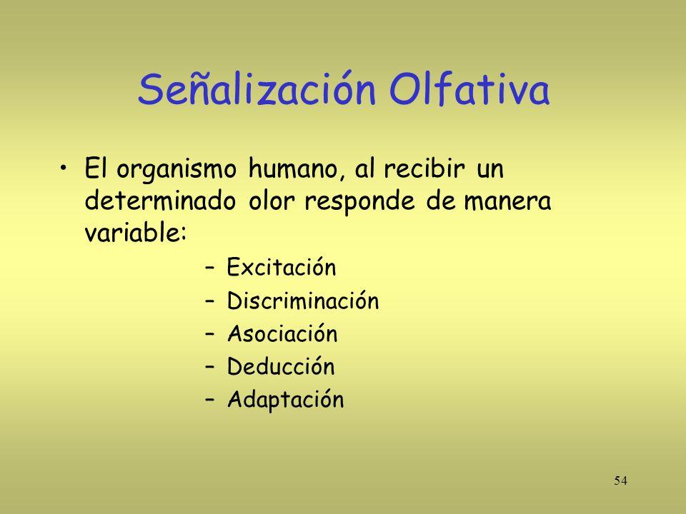 54 Señalización Olfativa El organismo humano, al recibir un determinado olor responde de manera variable: –Excitación –Discriminación –Asociación –Ded