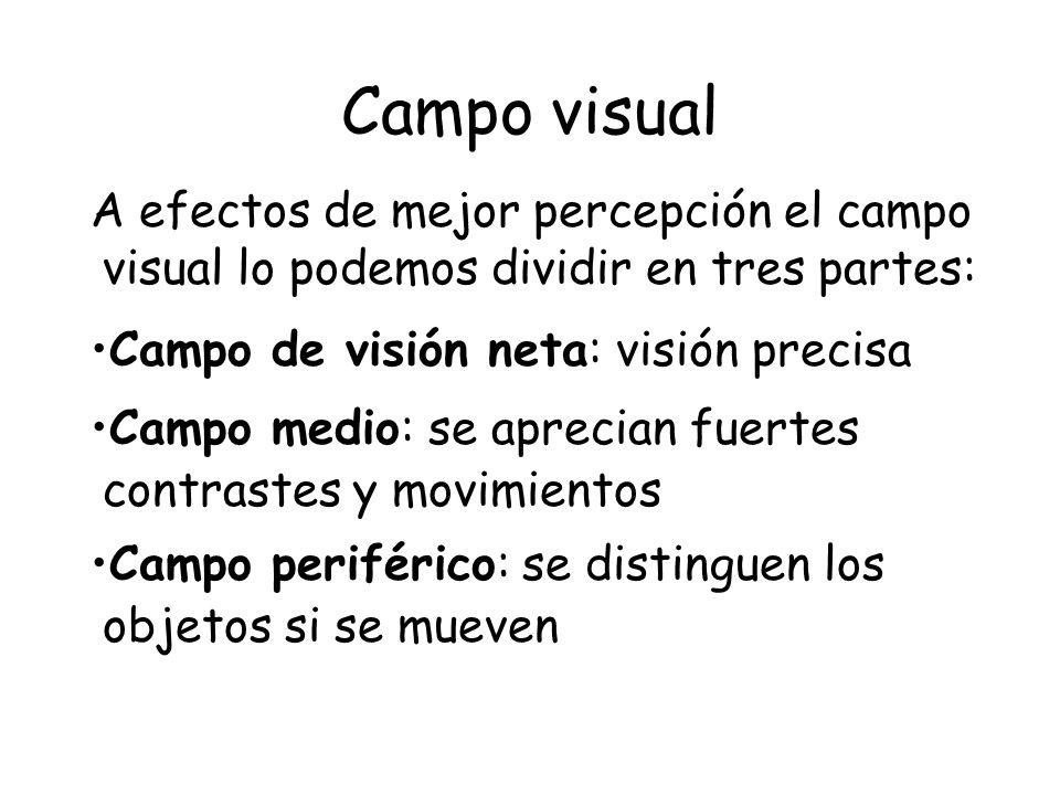 Campo visual A efectos de mejor percepción el campo visual lo podemos dividir en tres partes: Campo de visión neta: visión precisa Campo medio: se apr