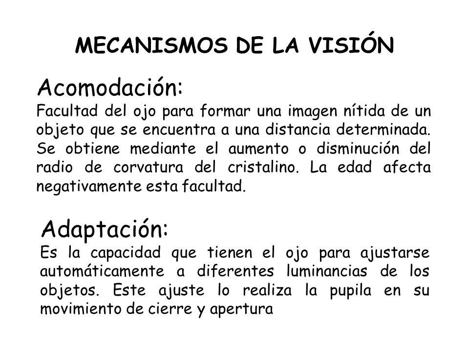 MECANISMOS DE LA VISIÓN Adaptación: Es la capacidad que tienen el ojo para ajustarse automáticamente a diferentes luminancias de los objetos. Este aju
