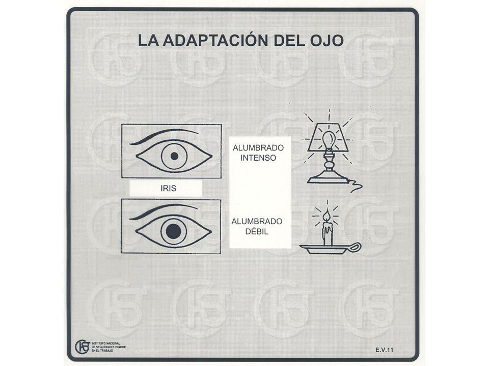 La visión es una característica personal y depende de: La sensibilidad del ojo.
