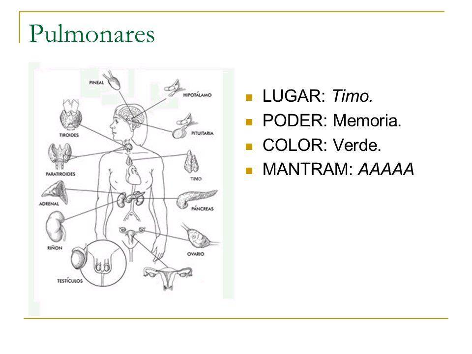 Pulmonares LUGAR: Timo. PODER: Memoria. COLOR: Verde. MANTRAM: AAAAA