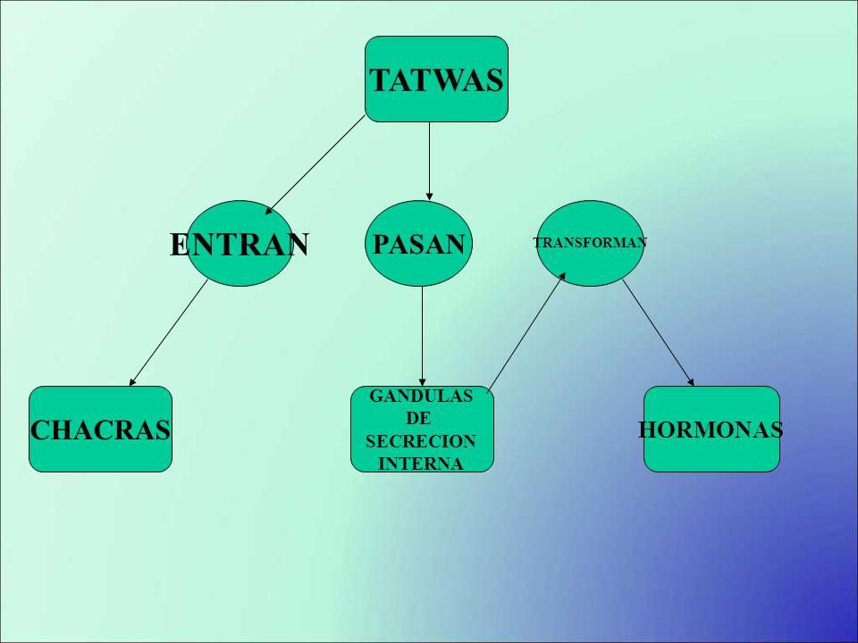 TATWAS CHACRAS GANDULAS DE SECRECION INTERNA HORMONAS ENTRAN PASAN TRANSFORMAN
