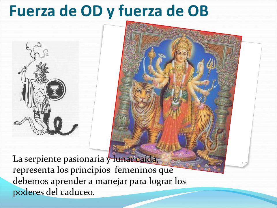 Fuerza de OD y fuerza de OB La serpiente pasionaria y lunar caída, representa los principios femeninos que debemos aprender a manejar para lograr los