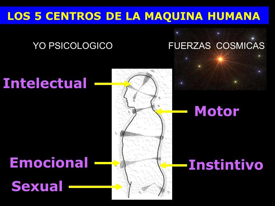 LOS 5 CENTROS DE LA MAQUINA HUMANA Intelectual Emocional Sexual Motor Instintivo YO PSICOLOGICOFUERZAS COSMICAS