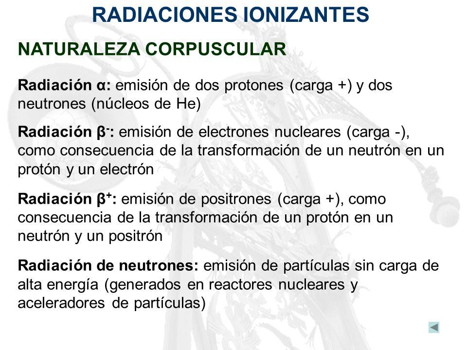 RADIACIONES IONIZANTES NATURALEZA CORPUSCULAR Radiación α: emisión de dos protones (carga +) y dos neutrones (núcleos de He) Radiación β - : emisión d