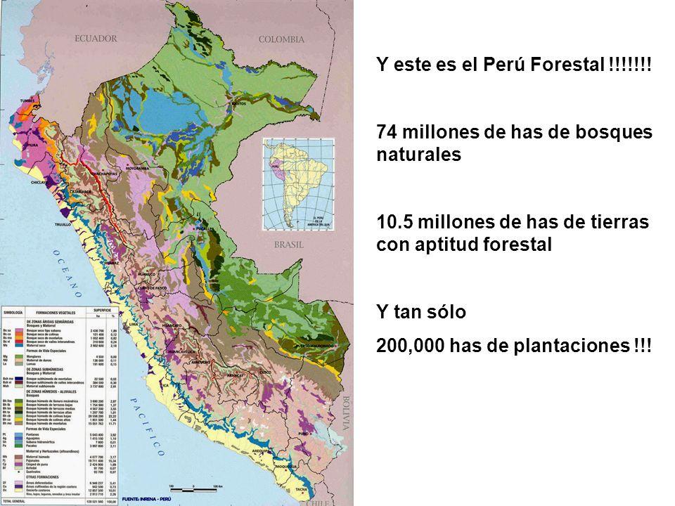 Y este es el Perú Forestal !!!!!!.