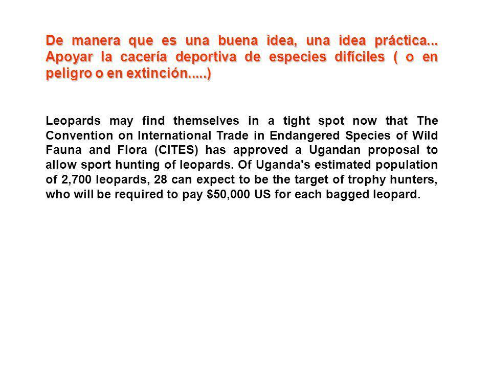 De manera que es una buena idea, una idea práctica... Apoyar la cacería deportiva de especies difíciles ( o en peligro o en extinción.....) Leopards m
