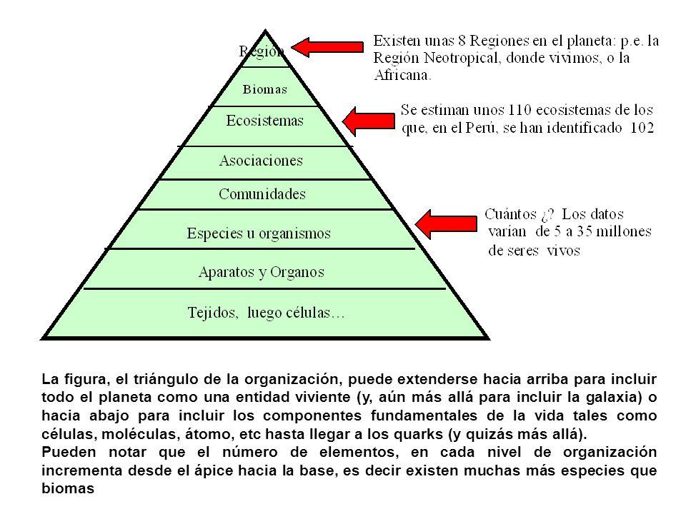 La figura, el triángulo de la organización, puede extenderse hacia arriba para incluir todo el planeta como una entidad viviente (y, aún más allá para