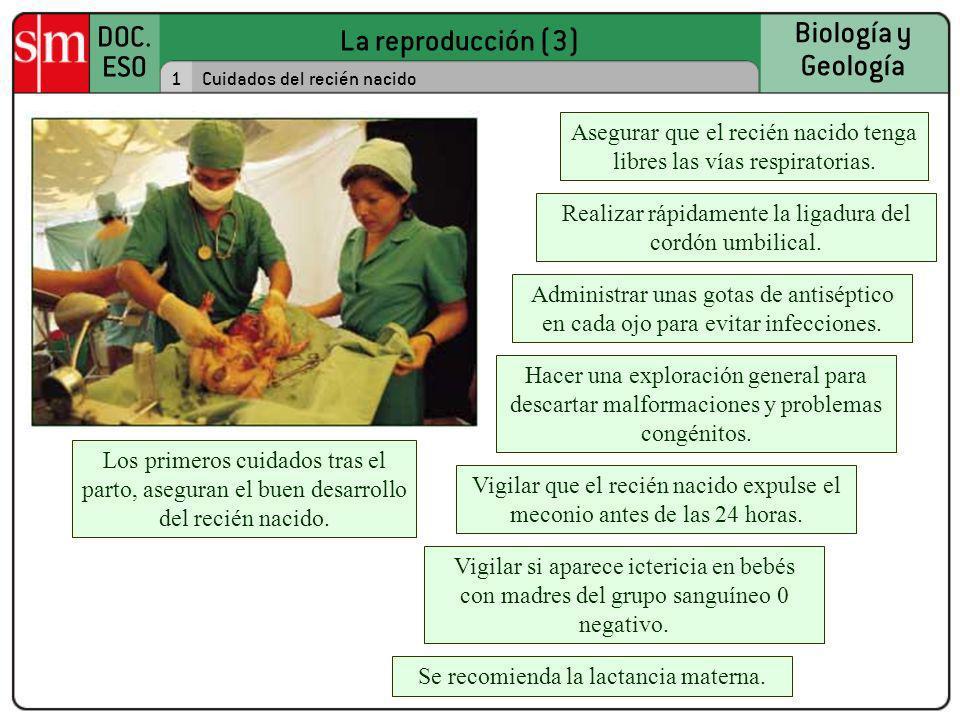 La reproducción (3) DOC. ESO Biología y Geología 1Cuidados del recién nacido Los primeros cuidados tras el parto, aseguran el buen desarrollo del reci