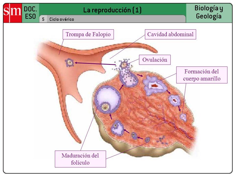 La reproducción (1) DOC.