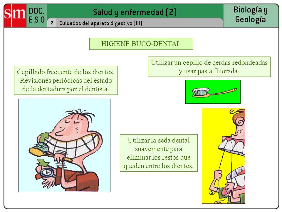 Salud y enfermedad (2) DOC. E S O Biología y Geología Utilizar un cepillo de cerdas redondeadas y usar pasta fluorada. 7Cuidados del aparato digestivo