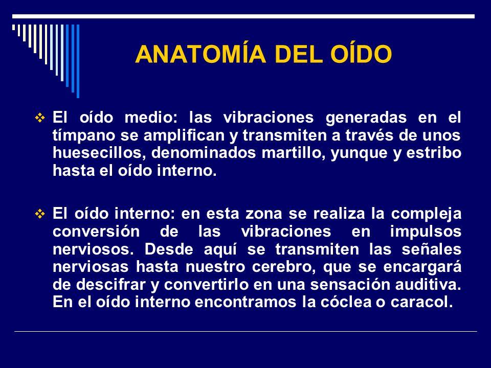 ANATOMÍA DEL OÍDO El oído medio: las vibraciones generadas en el tímpano se amplifican y transmiten a través de unos huesecillos, denominados martillo