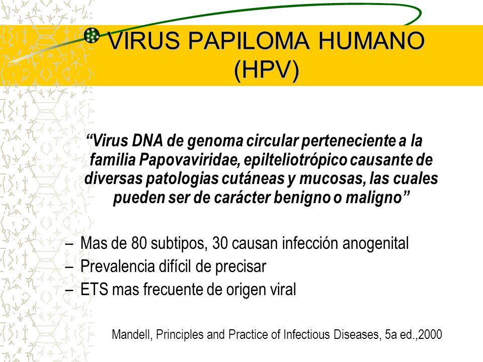 HPV : GENERALIDADES Transmision – directa – sexual – vertical Presentación clínica – verrugas : vulgar, plana, palmar, plantar – condilomas – epidermodisplasia verruciforme