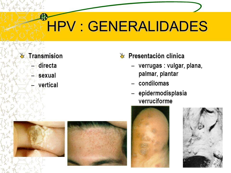 HPV : GENERALIDADES Transmision – directa – sexual – vertical Presentación clínica – verrugas : vulgar, plana, palmar, plantar – condilomas – epidermo