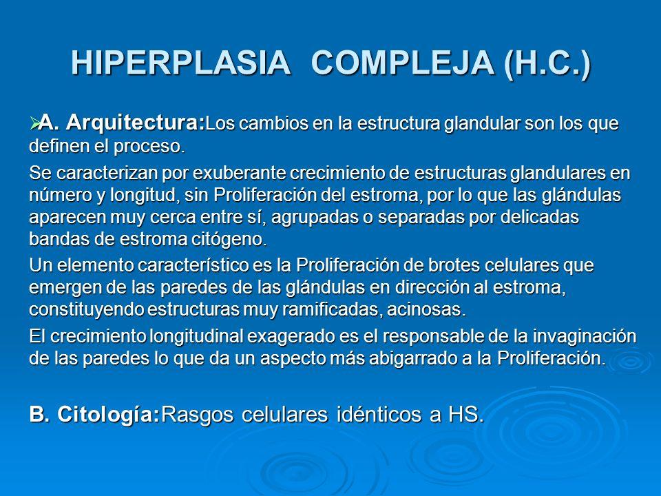 HIPERPLASIA COMPLEJA (H.C.) A. Arquitectura: Los cambios en la estructura glandular son los que definen el proceso. A. Arquitectura: Los cambios en la