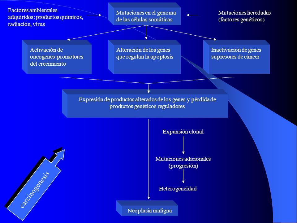 Factores Genéticos: Es rara la influencia del factor genético en la predisposición a cáncer de pulmón