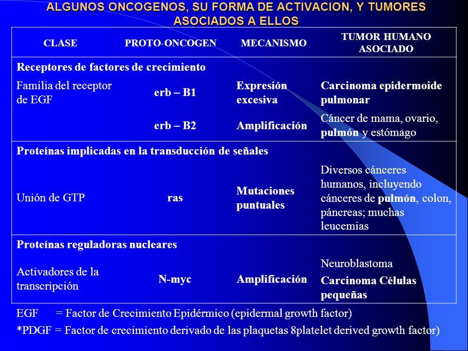 Factores ambientales adquiridos: productos químicos, radiación, virus Mutaciones en el genoma de las células somáticas Mutaciones heredadas (factores