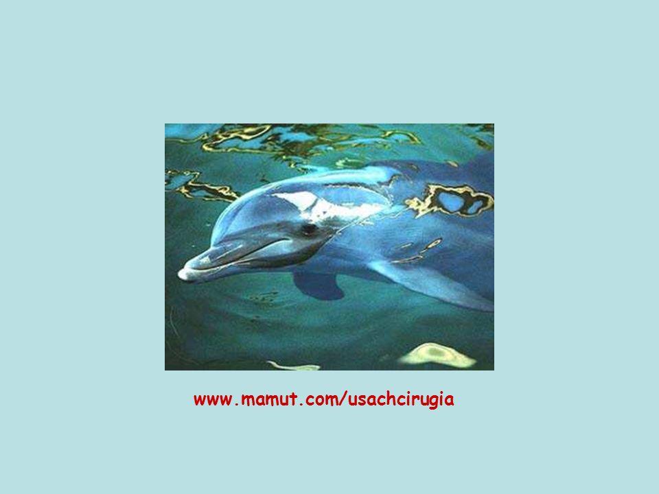 www.mamut.com/usachcirugia