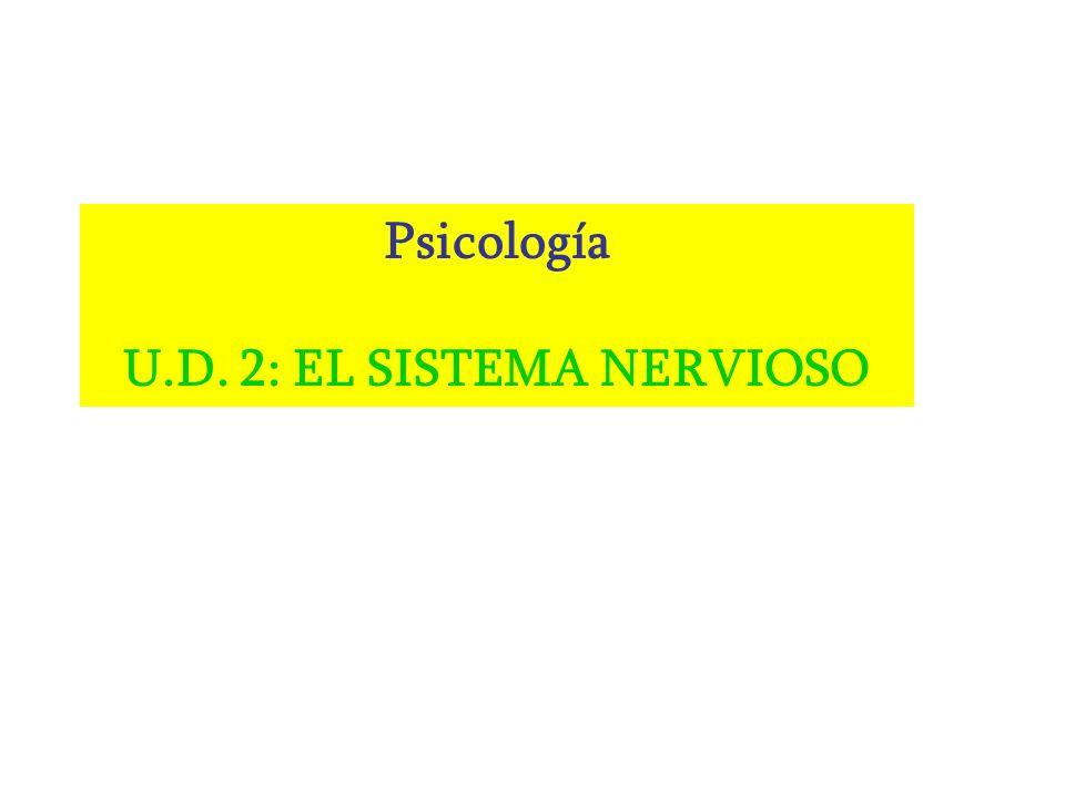 Psicología U.D. 2: EL SISTEMA NERVIOSO