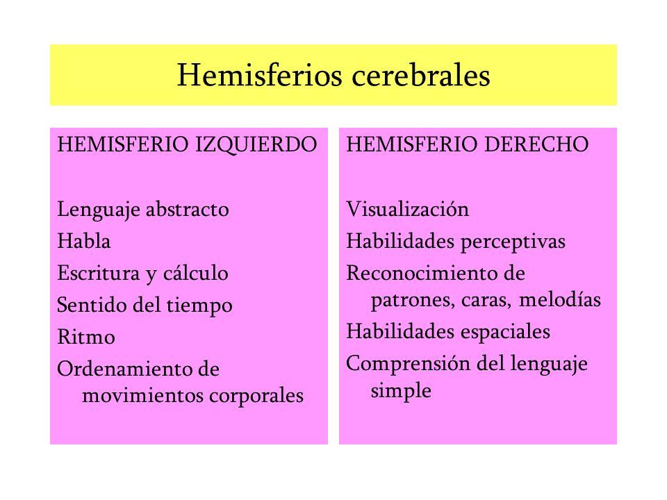 Hemisferios cerebrales HEMISFERIO IZQUIERDO Lenguaje abstracto Habla Escritura y cálculo Sentido del tiempo Ritmo Ordenamiento de movimientos corporal