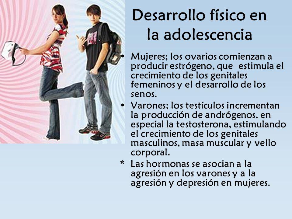 Desarrollo físico en la adolescencia Mujeres; los ovarios comienzan a producir estrógeno, que estimula el crecimiento de los genitales femeninos y el