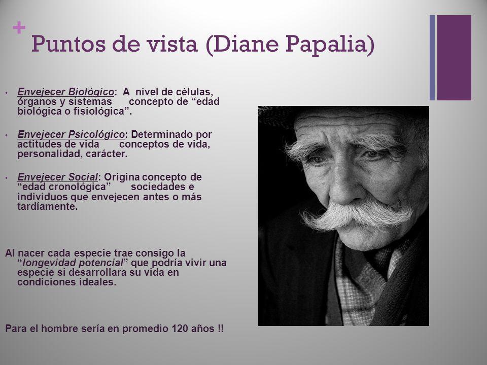 + Puntos de vista (Diane Papalia) Envejecer Biológico: A nivel de células, órganos y sistemas concepto de edad biológica o fisiológica. Envejecer Psic