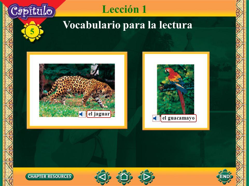 5 Lección 1 Vocabulario para la lectura el jaguar el guacamayo