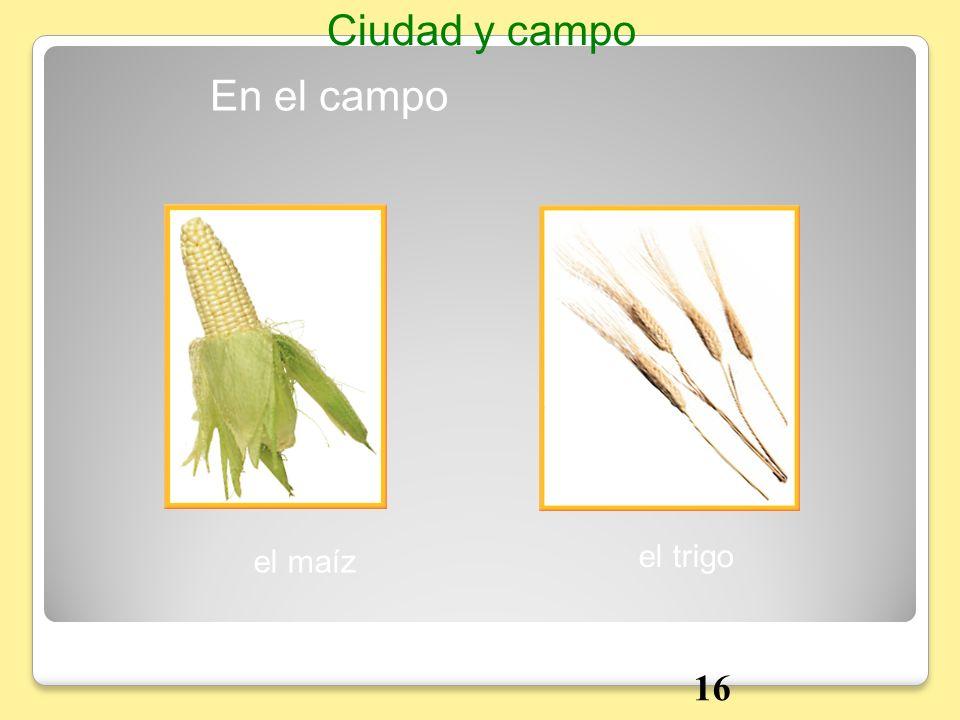 En el campo Ciudad y campo el maíz el trigo 16