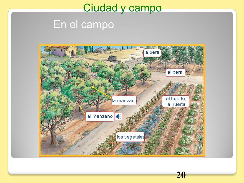 En el campo Ciudad y campo la pera el peral el huerto, la huerta la manzana los vegetales el manzano 20