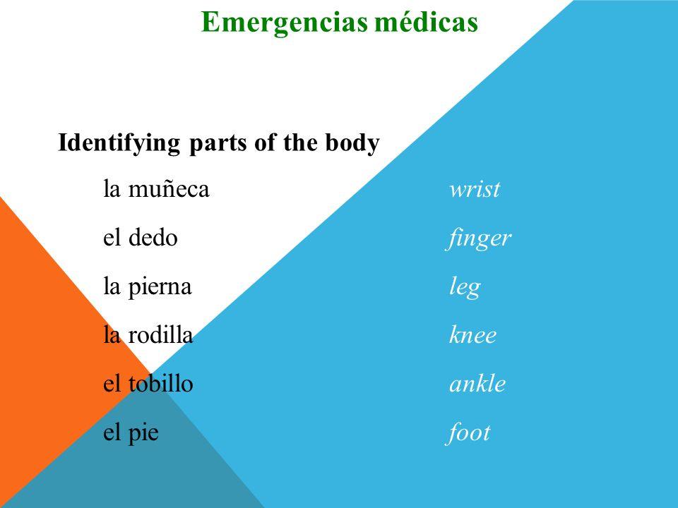 el cuerpobody Identifying parts of the body Vocabulario Emergencias médicas el hombroshoulder el brazoarm el cuelloneck el pechochest el codoelbow (Sp