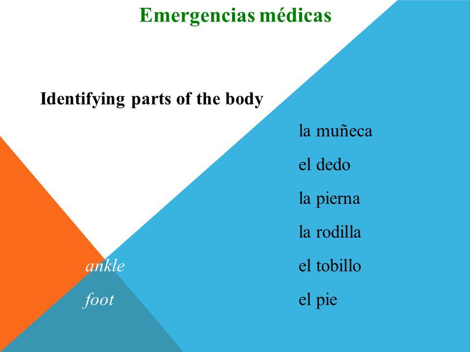 el cuerpobody Identifying parts of the body Vocabulario Emergencias médicas el hombroshoulder el brazoarm el cuelloneck el pechochest el codoelbow (En