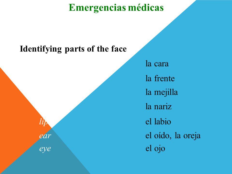 la muñecawrist Identifying parts of the body Vocabulario Emergencias médicas el dedofinger la piernaleg la rodillaknee el tobilloankle el piefoot (Eng
