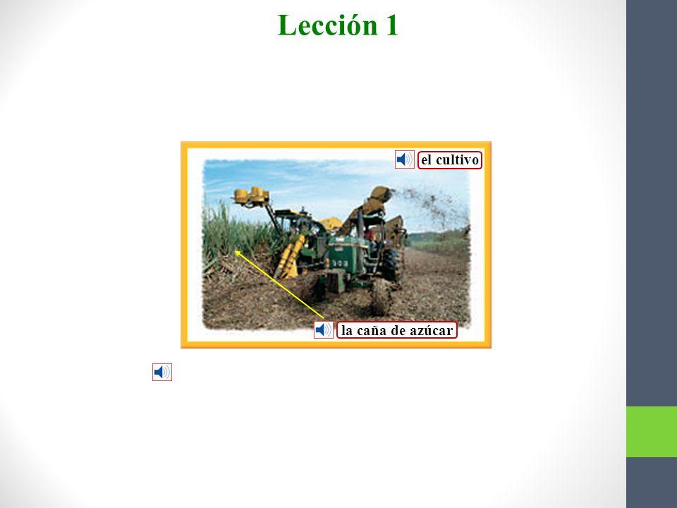 Los agricultores se dedican al cultivo de la caña de azúcar.