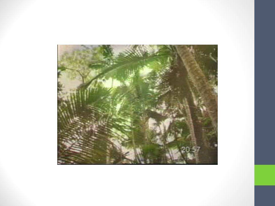 Completen. 1. Si estuviéramos en Puerto Rico ______ El Yunque. (visitar) Answer: visitaríamos 2. Si voy a la casa de Silvia también ______ a la casa d