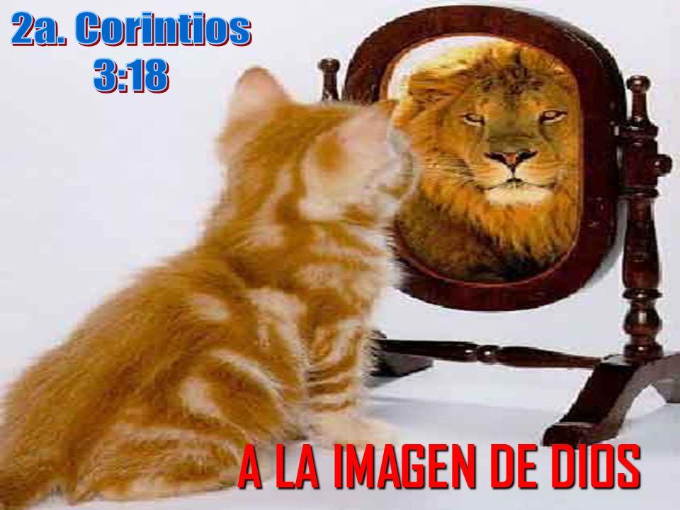 Aprendiendo a vernos como Dios nos ve: A SU IMAGEN A SU IMAGEN Imagen: Figura, representación, semejanza y apariencia de algo o alguien.