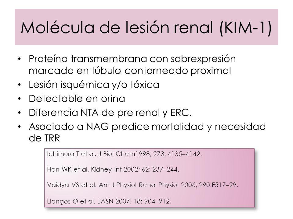 Molécula de lesión renal (KIM-1) Proteína transmembrana con sobrexpresión marcada en túbulo contorneado proximal Lesión isquémica y/o tóxica Detectabl