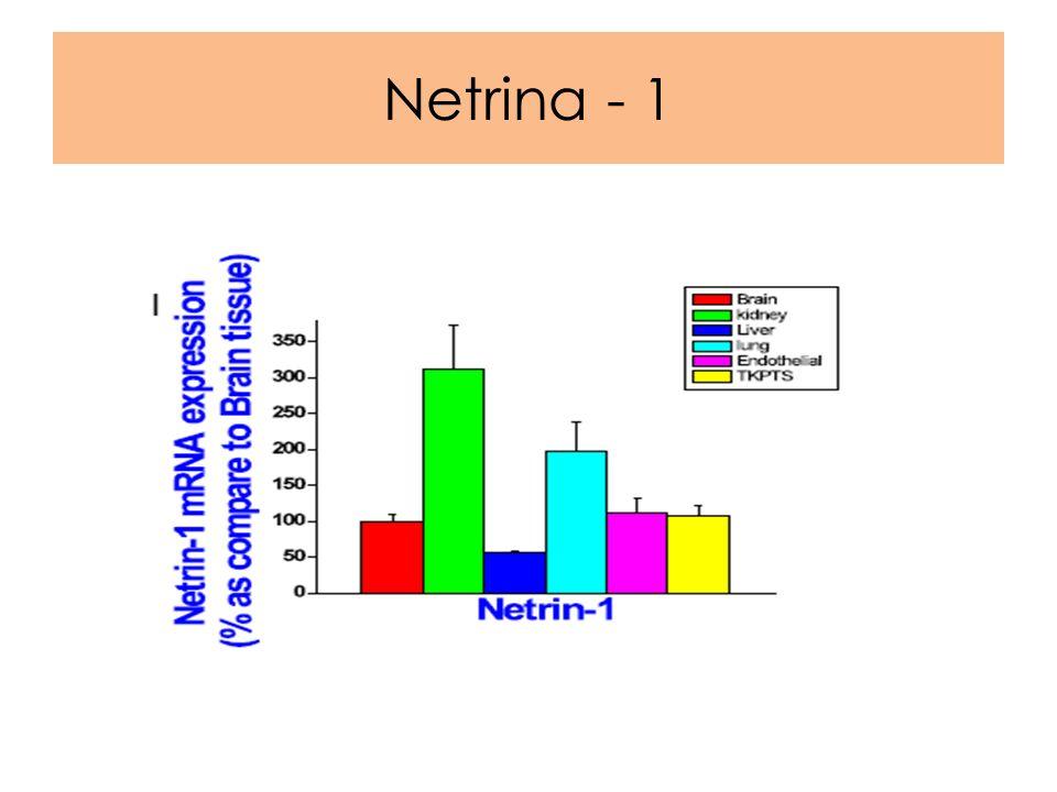 Netrina - 1