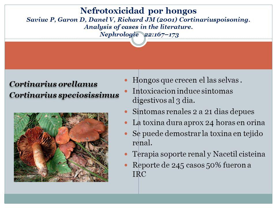Cortinarius orellanus Cortinarius speciosissimus Cortinarius orellanus Cortinarius speciosissimus Hongos que crecen el las selvas. Intoxicacion induce