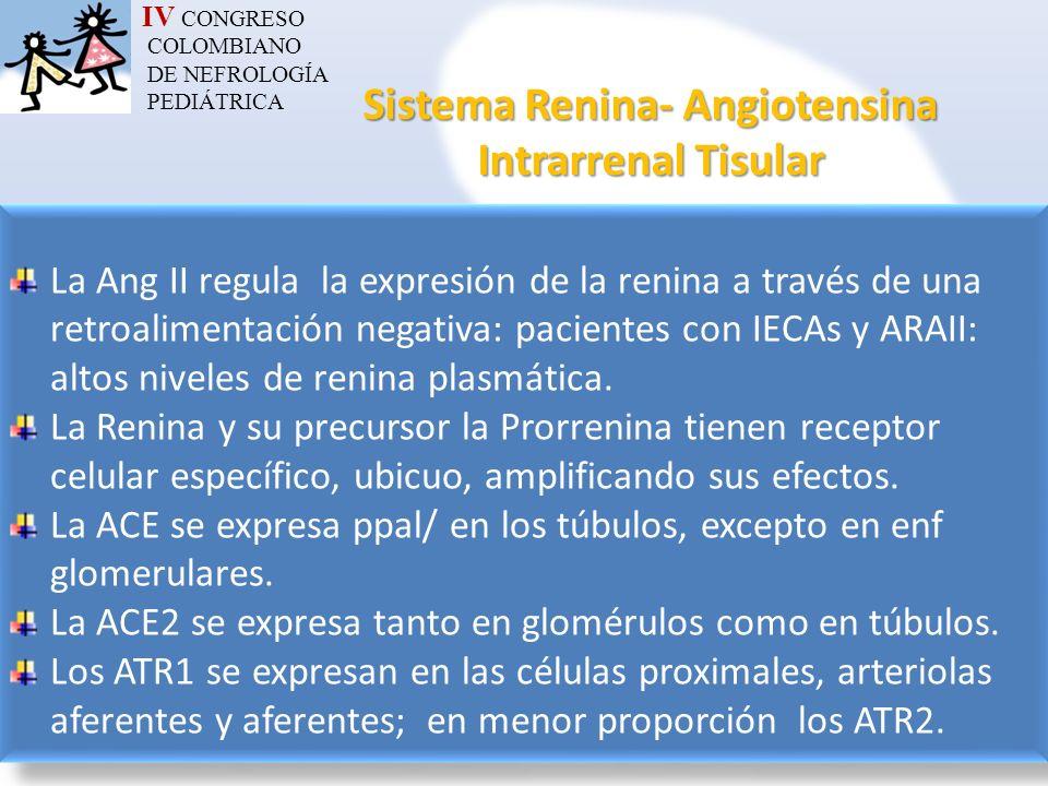 IV CONGRESO COLOMBIANO DE NEFROLOGÍA PEDIÁTRICA Sistema Renina- Angiotensina Intrarrenal Tisular La Ang II regula la expresión de la renina a través d