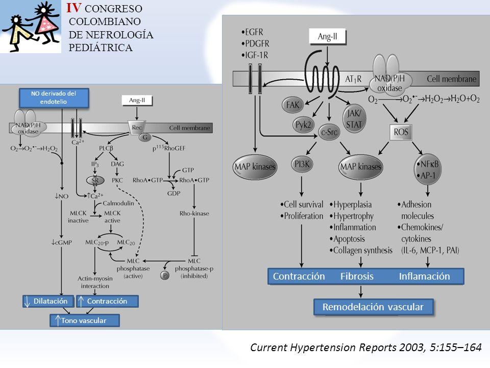IV CONGRESO COLOMBIANO DE NEFROLOGÍA PEDIÁTRICA Current Hypertension Reports 2003, 5:155–164 NO derivado del endotelio DilataciónContracción Tono vasc