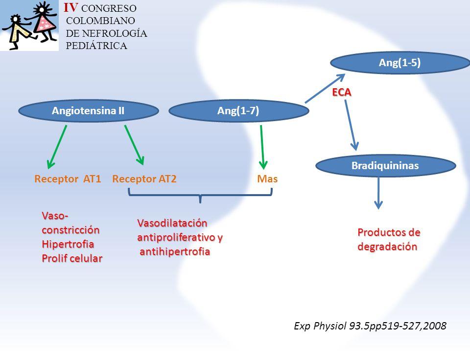 IV CONGRESO COLOMBIANO DE NEFROLOGÍA PEDIÁTRICA Angiotensina IIAng(1-7) Receptor AT1 Receptor AT2 Mas Vaso-constricciónHipertrofia Prolif celular Vaso