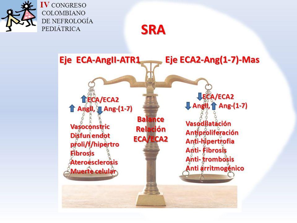 IV CONGRESO COLOMBIANO DE NEFROLOGÍA PEDIÁTRICASRA Eje ECA-AngII-ATR1 Eje ECA2-Ang(1-7)-Mas Balance Relación ECA/ECA2 ECA/ECA2 AngII, Ang-(1-7) AngII,
