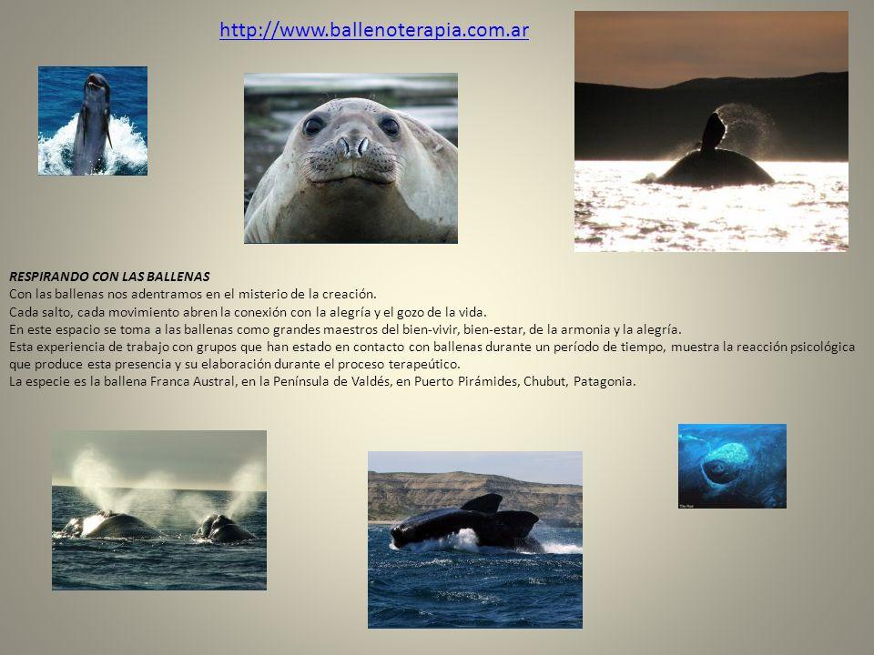 http://www.ballenoterapia.com.ar RESPIRANDO CON LAS BALLENAS Con las ballenas nos adentramos en el misterio de la creación. Cada salto, cada movimient