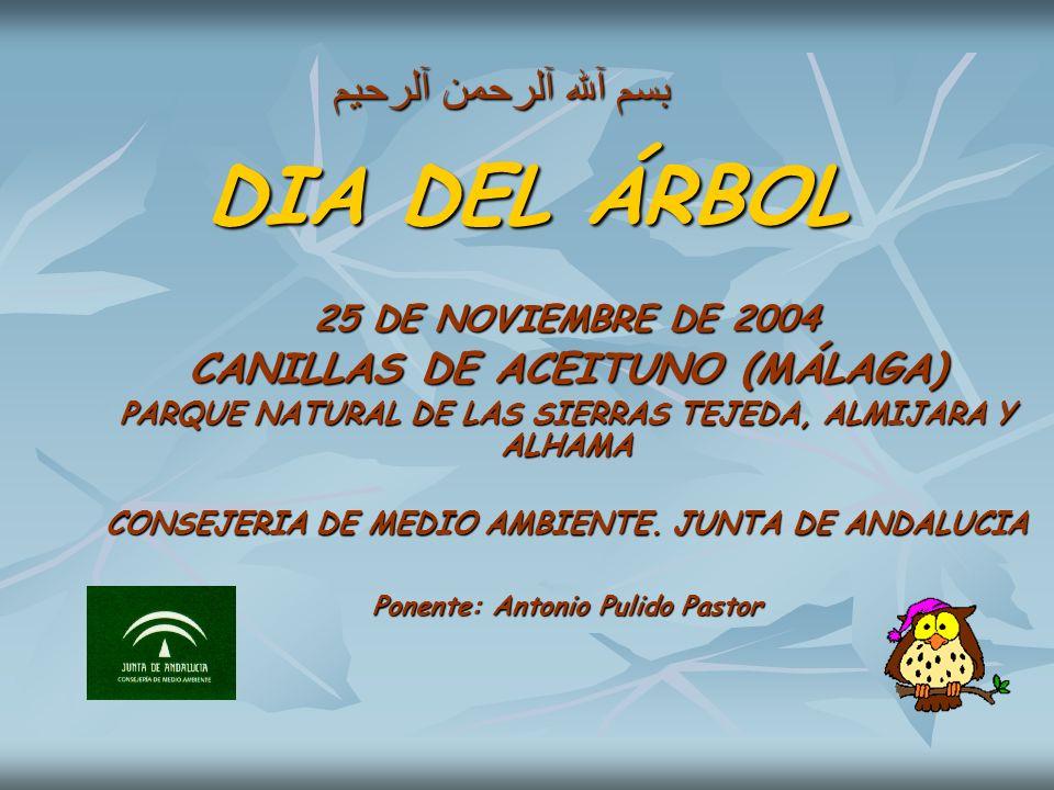 DIA DEL ÁRBOL 25 DE NOVIEMBRE DE 2004 CANILLAS DE ACEITUNO (MÁLAGA) PARQUE NATURAL DE LAS SIERRAS TEJEDA, ALMIJARA Y ALHAMA CONSEJERIA DE MEDIO AMBIEN