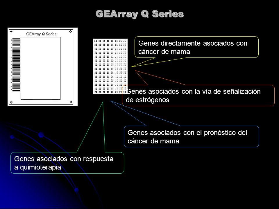 GEArray Q Series Genes directamente asociados con cáncer de mama Genes asociados con la vía de señalización de estrógenos Genes asociados con el pronó