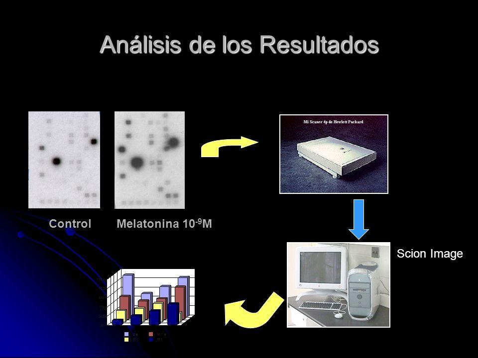 Análisis de los Resultados ControlMelatonina 10 -9 M Scion Image