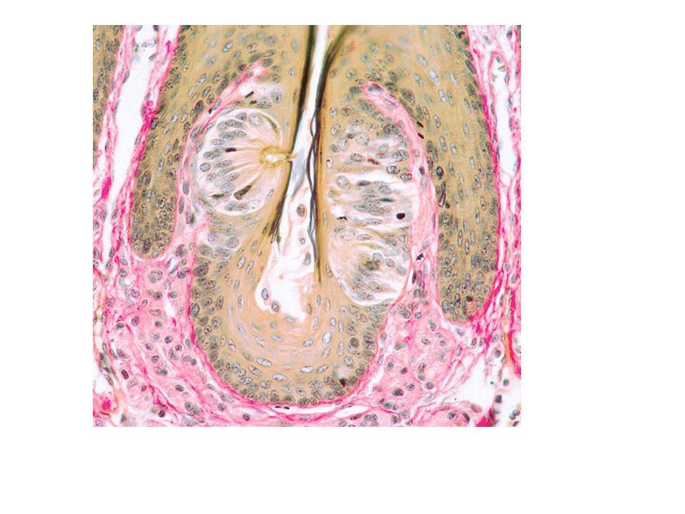 Número estimado de casos nuevos y muertes por cáncer de la boca (cavidad oral) en los Estados Unidos en 2012: Casos nuevos: 40 250 (cavidad oral y faringe) Muertes: 7 850 (cavidad oral y faringe) Instituto Nacional del Cáncer.