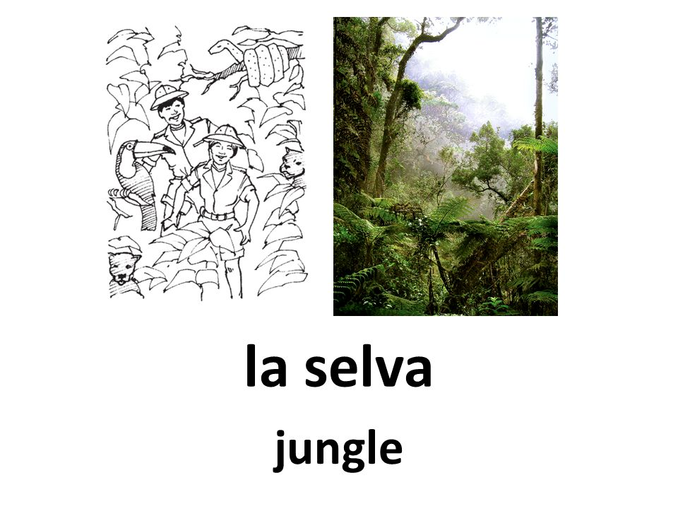 la selva jungle