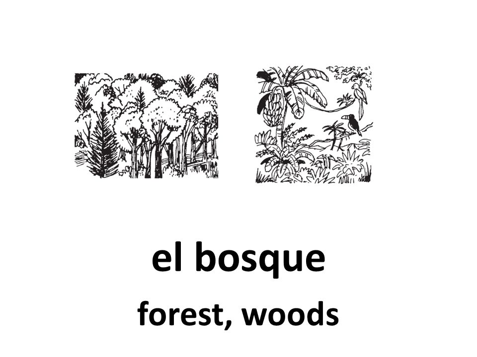 el bosque forest, woods